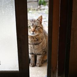 ノラ猫に餌を与えると法律違反となるか?