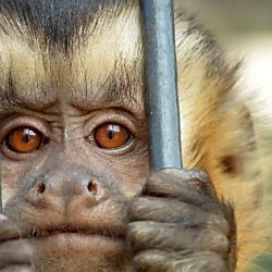 サルが自分で撮った写真をめぐる法律問題について