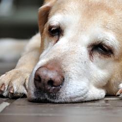 動物の虐待に関する法律について