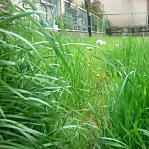 空き地を所有している場合雑草の除去は義務でしょうか?