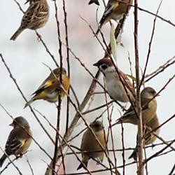 近所の庭木に集まる野鳥の糞害。法的に何か対策できますか?