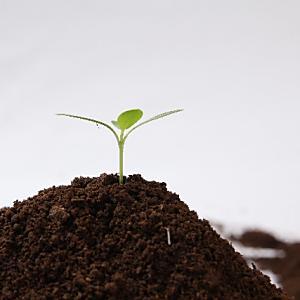 移転問題で紛糾する築地市場(2) 豊洲盛り土問題
